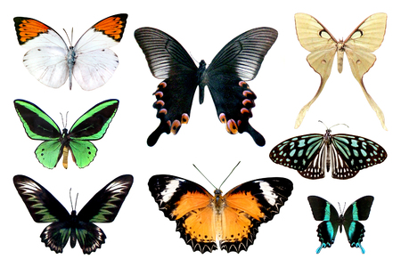 Set of eight colorful butterfly isolated on white background, yellow green blue red pink wings insects flying. Banco de Imagens
