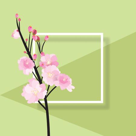 Volle Blüte Rosa Sakura-Baum Busch (Kirschblüte) Schwarzem Holz ...
