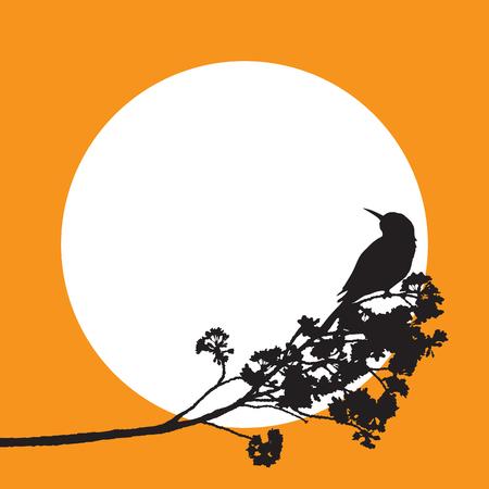 Bird on full bloom sakura flower isolated black limb, Cherry blossom flora bush vintage silhouette on orange circle frame, white round border. Illustration