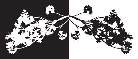 Full bloom sakura flower isolated black wood, Cherry blossom flora bush vintage silhouette. Illustration