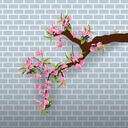Full bloom sakura flower tree isolated pastel brick wall, pink japan flora bush blue background, spring floral branch on gray wallpaper. Treetop of Cherry blossom petal leaf vector.