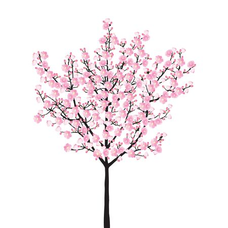 Full bloom pink sakura tree,  vintage Cherry blossom black wood isolated on white background, flower branch backdrop, flora bush banner. Pastel sweet spring floral wallpaper.