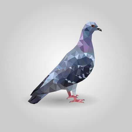 One gray pigeon blue wings low polygon isolated on white background, colorful dove bird modern geometric icon, avian pet crystal design illustration. 向量圖像