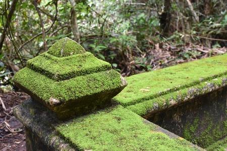 helechos: Roca Helechos verdes cubiertas Foto de archivo