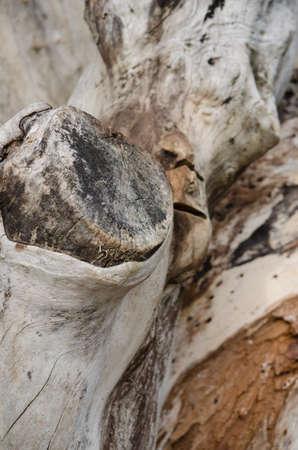 boom kappen: De stomp van een boom snijden Stockfoto