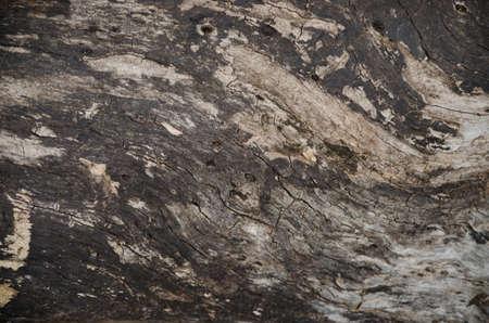 boom kappen: De stomp van een boom zagen van hout