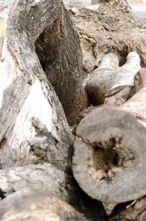 boom kappen: De stronk van een boom te snijden hout