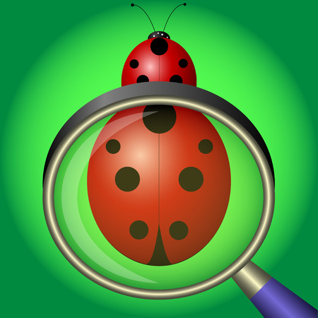 ladybug under magnifying glass on green background. Vector Illustration
