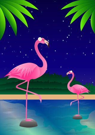 Pink flamingos on the pond against the night starry sky. Vector illustration Ilustrace