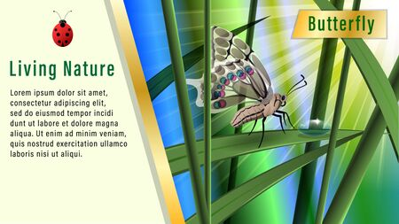 Butterfly on a blade of grass under the sun. Boke, Realistic horizontal banner, poster vector illustration. Illustration