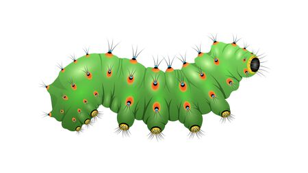 Realistic green Caterpillar isolated on a white background, side view. Horizontal vector illustration Ilustrace
