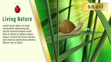 Snail on a blade of grass under the sun. Boke, Realistic horizontal banner, poster vector illustration.