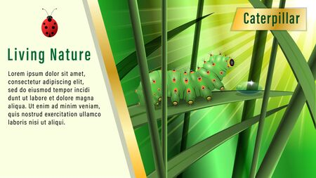 Caterpillar on a blade of grass under the sun. Boke, Realistic horizontal banner, poster vector illustration. Ilustração
