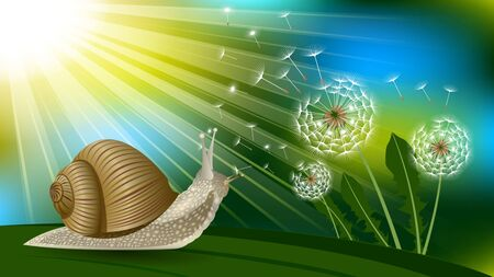 Snail on a blade of grass under the sun, Dandelion with flying fluff. Boke, Realistic horizontal vector illustration