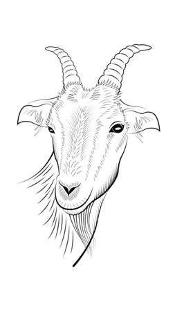 handmade drawing of the head of the goat isolated on a white background. Vector illustration Stock Illustratie