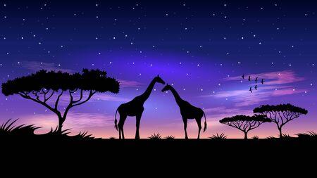 Africa di notte. Silhouette di due giraffe nella savana. Bellissimo cielo stellato dopo il tramonto. Paesaggio della natura africana realistico. Illustrazione vettoriale.