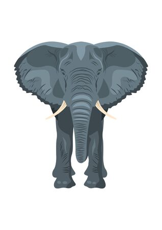 Standing gray Elephant front view, isolated on white background. Vector illustration.  イラスト・ベクター素材