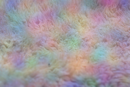 unwashed: Close up of Unwashed Raw Sheep Wool in Natural Color