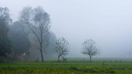 Foggy Morning, Punjab, India