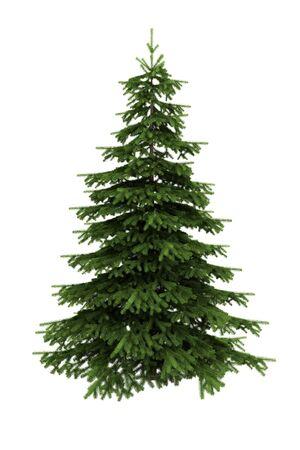 picea: spruce tree Stock Photo
