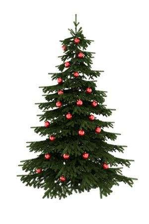 picea: christmas tree with red balls