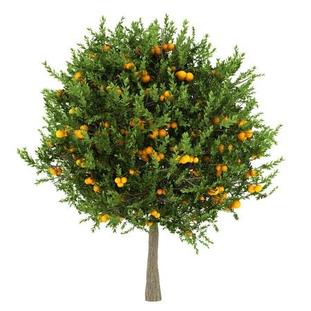 オレンジの木が白い背景で隔離