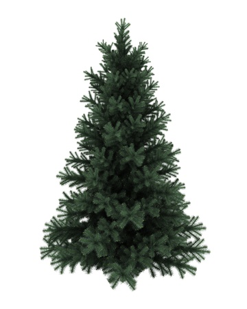picea: Alpine fir tree isolated on white background Stock Photo