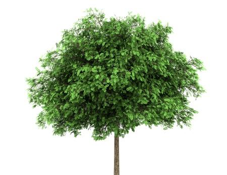 """szarańcza: czarny drzewo szaraÅ""""cza na biaÅ'ym tle"""