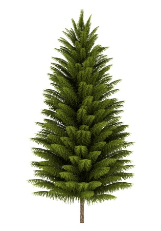 spruce: norway spruce tree isolated on white background