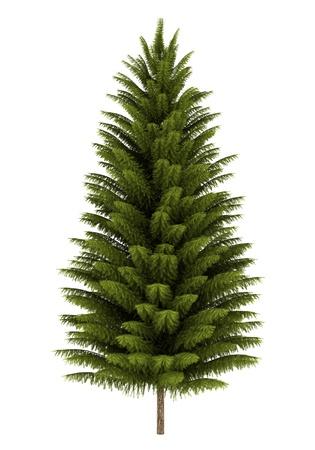 norway spruce tree isolated on white background