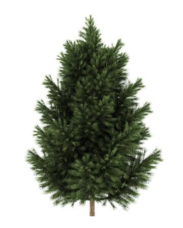 branche pin: europ�enne pin noir isol� sur fond blanc