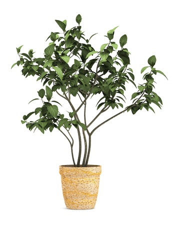 cutout: decorative plant in pot isolated on white background Stock Photo