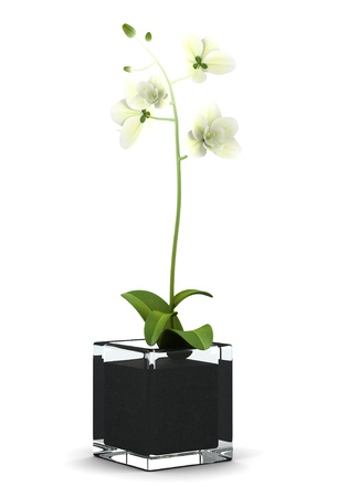 orchid: orchid flower in pot isolated on white background Stock Photo