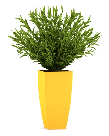 houseplant: decorative houseplant in yellow pot isolated on white background