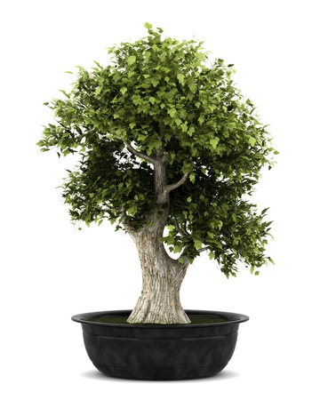 bonsai plant in pot isolated on white background Stock Photo