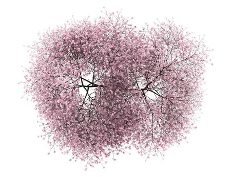 arboles frondosos: vista desde arriba del árbol de cereza amarga aisladas sobre fondo blanco