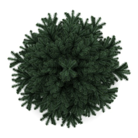 top view of alpine fir tree isolated on white background
