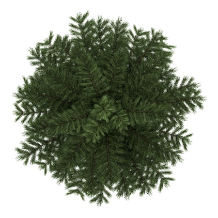 top view of scots pine tree isolated on white background Standard-Bild