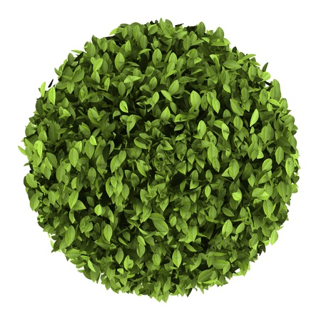top view of decorative round plant isolated on white background