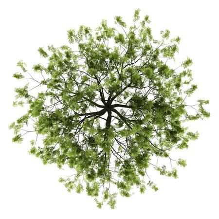 柳の木の白い背景で隔離のトップ ビュー 写真素材