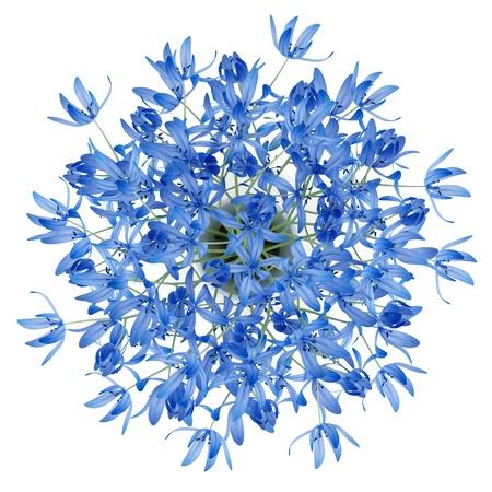 Draufsicht der blauen Blumen in der Vase isoliert auf weißem Hintergrund