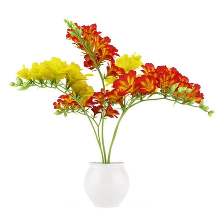 red and yellow flower in pot isolated on white background Stock Photo - 17728854