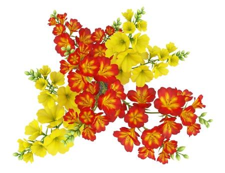 Draufsicht der roten und gelben Blumen im Topf isoliert auf weißem Hintergrund