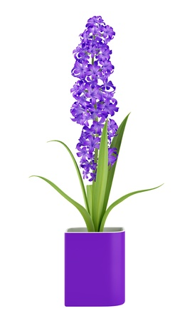 houseplant: purple flower in pot isolated on white background