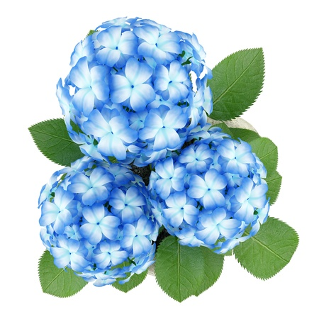 top view of blue flower in stone pot isolated on white background photo