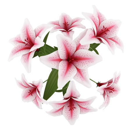 top view of bouquet of pink lilies isolated on white background photo