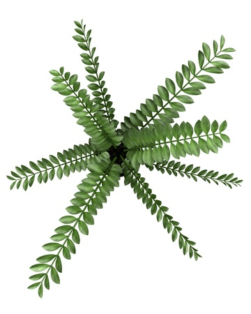 top view of decorative plant in pot isolated on white background Stock Photo - 18170341