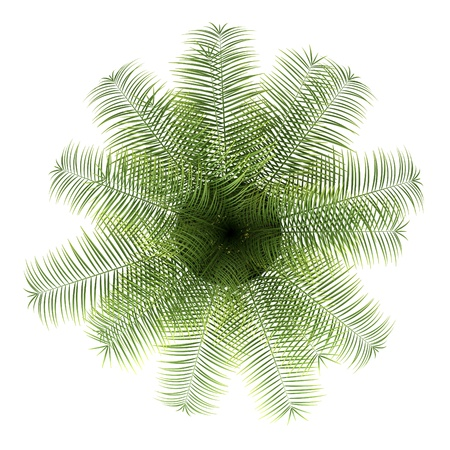top view of palm tree in pot isolated on white background photo