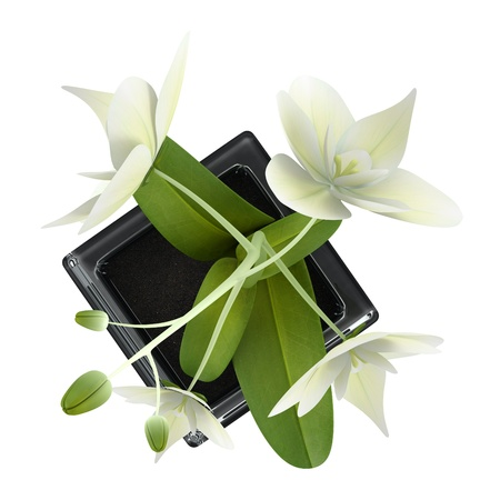 top view of orchid flower in pot isolated on white background Stock Photo - 18729730