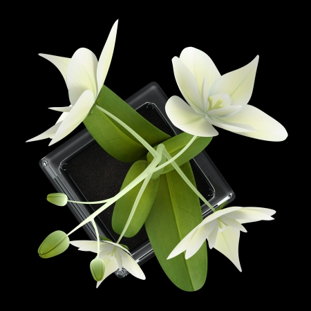 top view of orchid flower in pot isolated on black background Stock Photo - 18877653